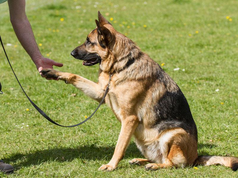 Подстилки для собак элитные
